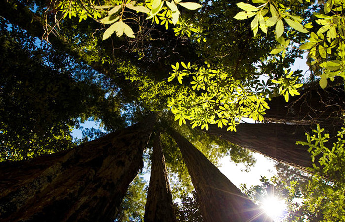 provincia_floristica_da_california