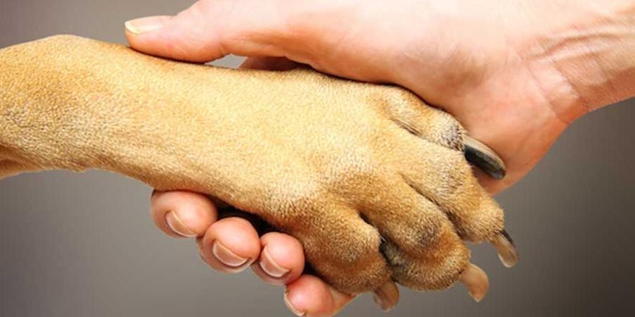 União Protetora dos Animais de Pirenópolis (UPAPIRI)
