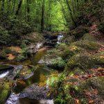 Cheiro de mato e odores da natureza de Pirenópolis ajudam a combater o estresse