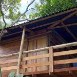Casa construída em árvore é nova opção de hospedagem em Pirenópolis