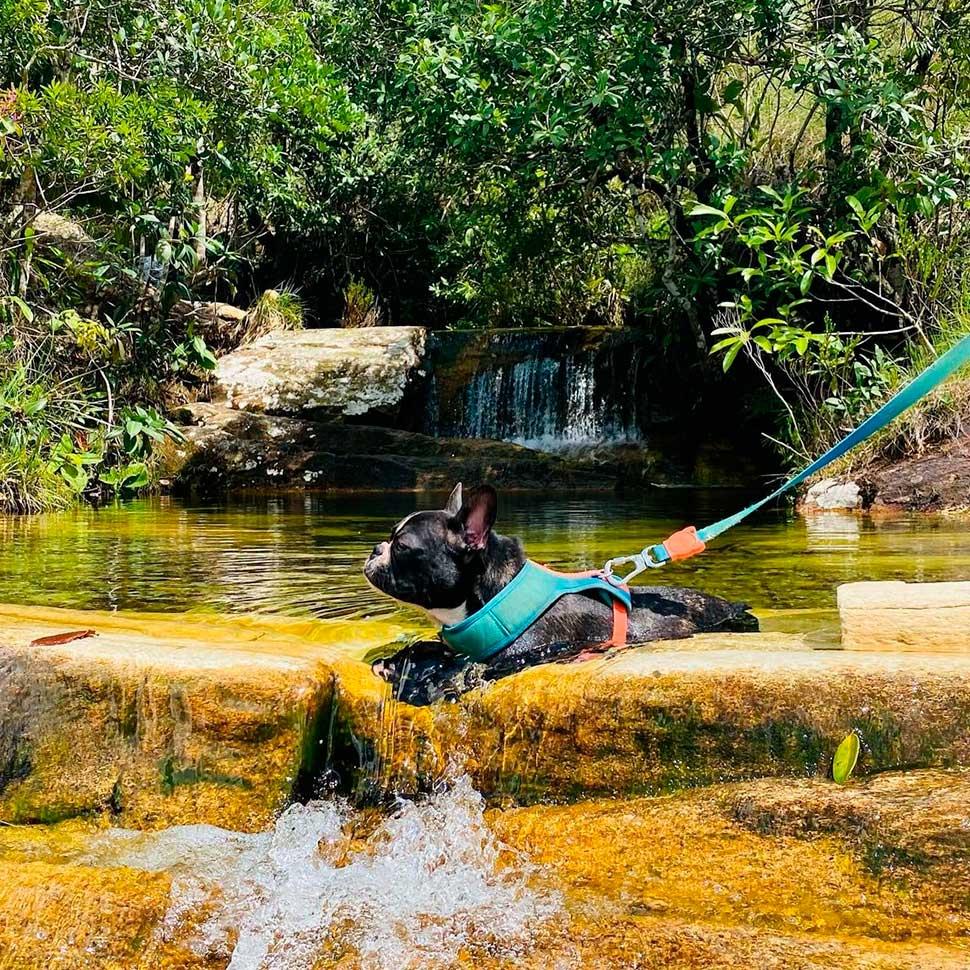 Viaje com seu bichinho - 15 lugares Pet Friendly em Pirenópolis Natureza