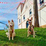 Viaje com seu bichinho - 15 lugares Pet Friendly em Pirenópolis
