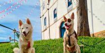 Viaje com seu bichinho – 15 lugares Pet Friendly em Pirenópolis