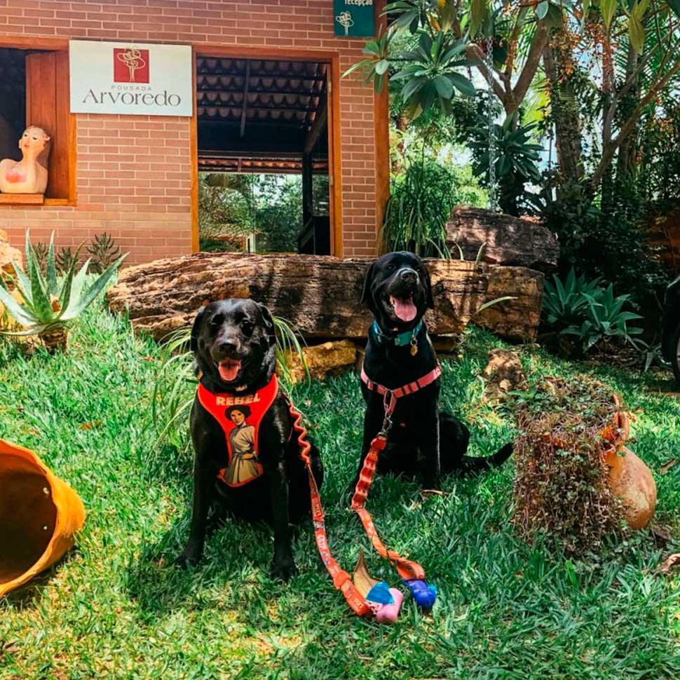 Viaje com seu bichinho - 15 lugares Pet Friendly em Pirenópolis Pousadas